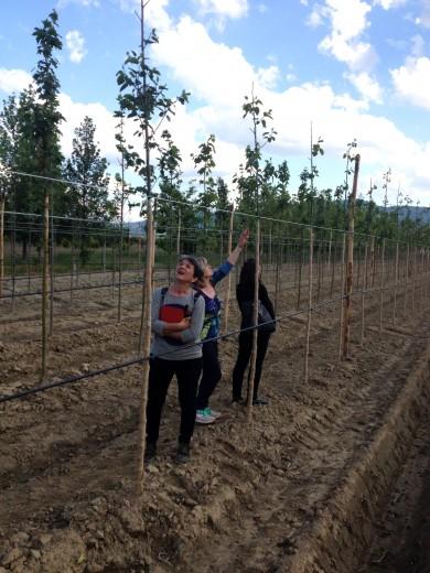 Nuove piantagioni